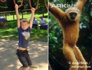 Gibbon boy combo
